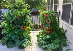 Garden towers Gardening solution for small space